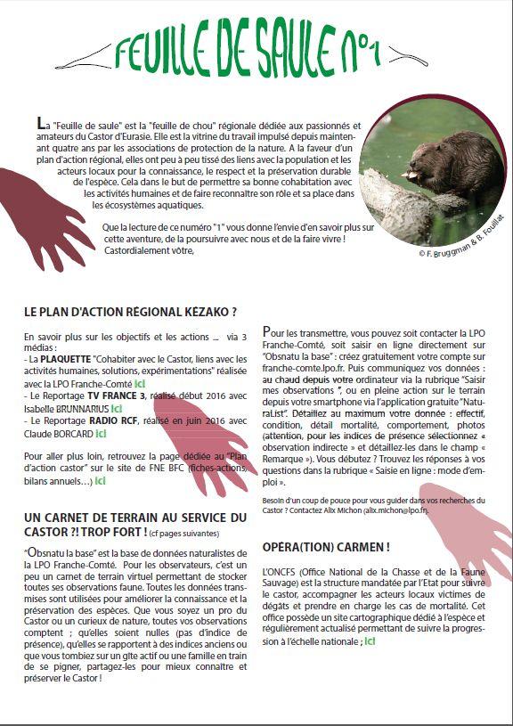 http://files.biolovision.net/franche-comte.lpo.fr/userfiles/proteger/Castor/P1feuillesaule.jpg
