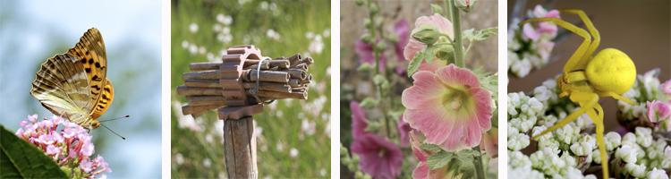 Biodiversité au jardin ©A. Boullah et ©M. Granger