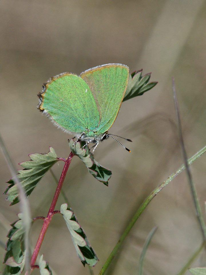 http://files.biolovision.net/www.faune-ain.org/userfiles/GroupeHerpeto/Photossortie/1811913213074894693398206057728747348632058n.jpg