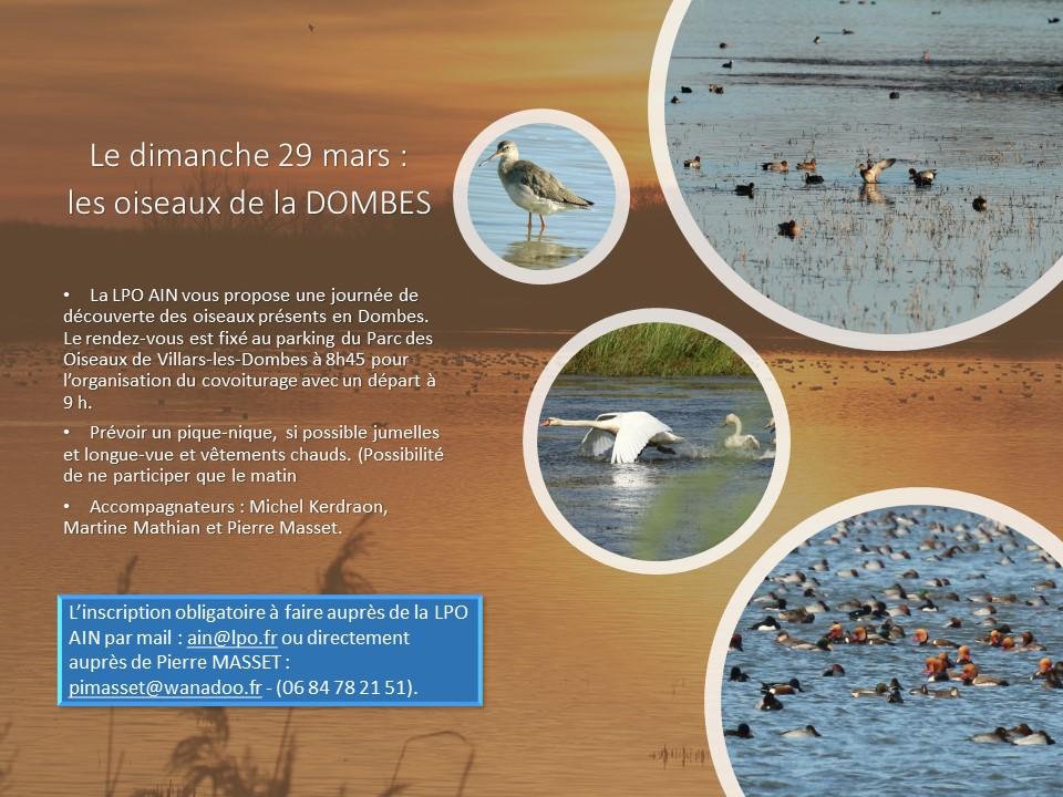 http://files.biolovision.net/www.faune-ain.org/userfiles/PrsentationsortieDombesdu29mars.jpg