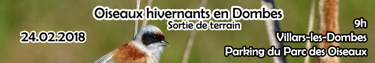 http://files.biolovision.net/www.faune-ain.org/userfiles/oiseaudombesfev.jpg
