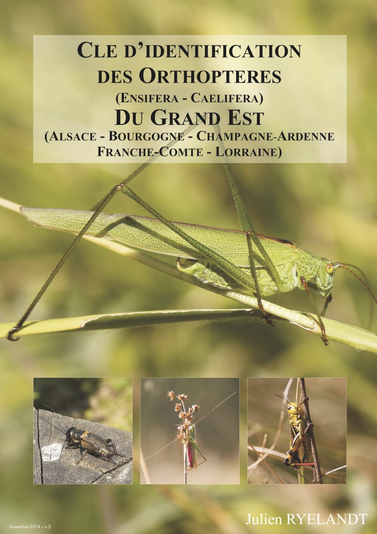 http://files.biolovision.net/www.faune-alsace.org/userfiles/Insectes/ORTHOPTERA/J-RYELANDT2014cleorthopteres-gd-estv3.jpg