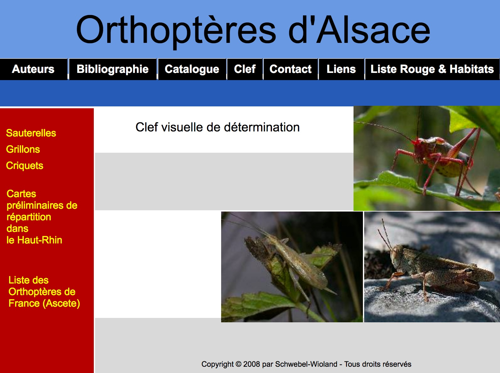 http://files.biolovision.net/www.faune-alsace.org/userfiles/Insectes/ORTHOPTERA/sitewebLS.jpg