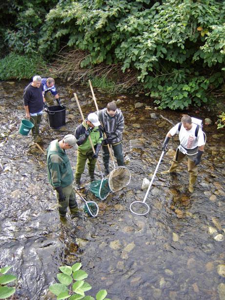 http://files.biolovision.net/www.faune-alsace.org/userfiles/associations/saumonrhin1.jpg