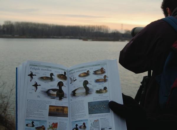 http://files.biolovision.net/www.faune-alsace.org/userfiles/modeemploi/wetlands/wetlands.jpg