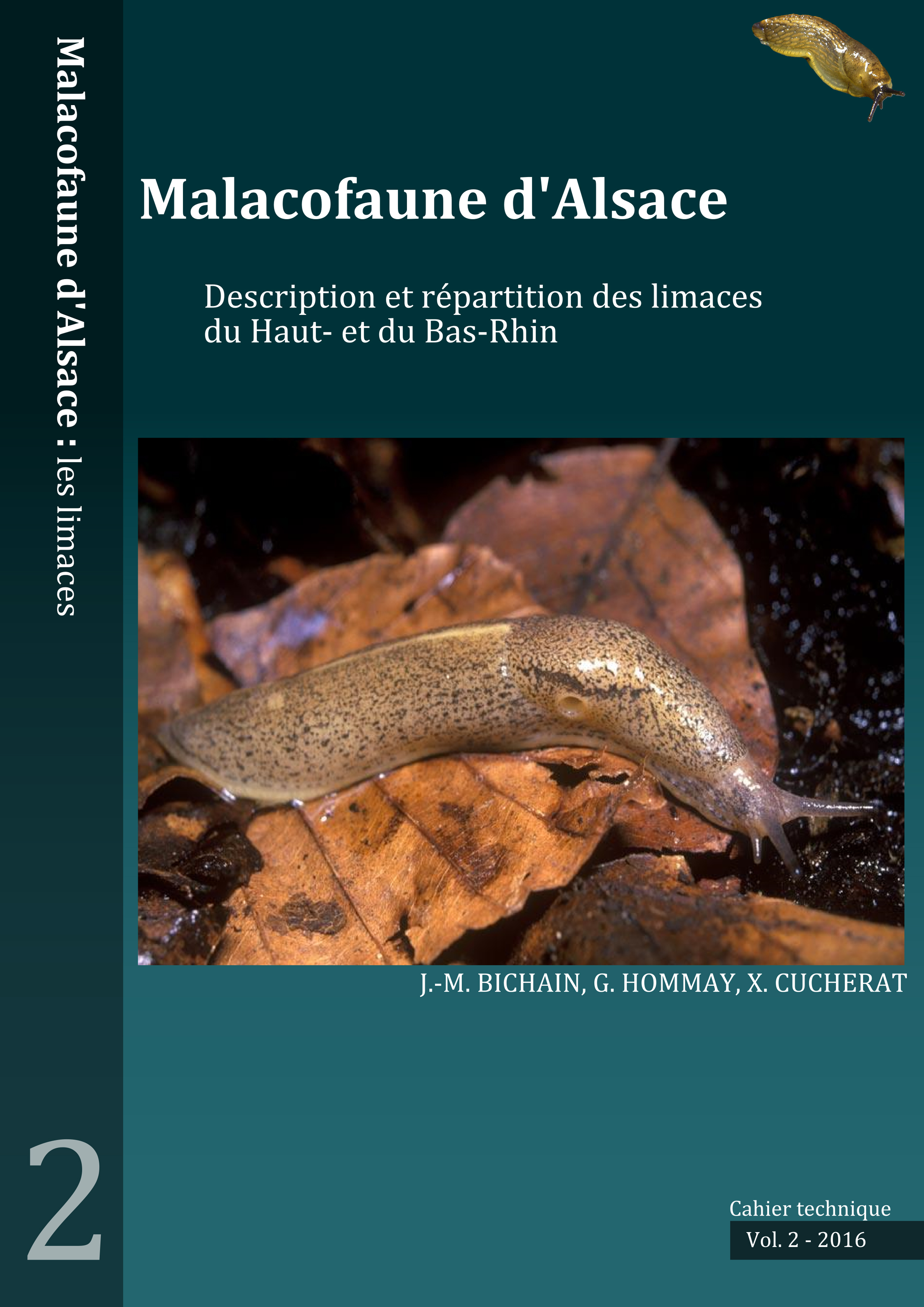 http://files.biolovision.net/www.faune-alsace.org/userfiles/mollusques/limace2016.jpg