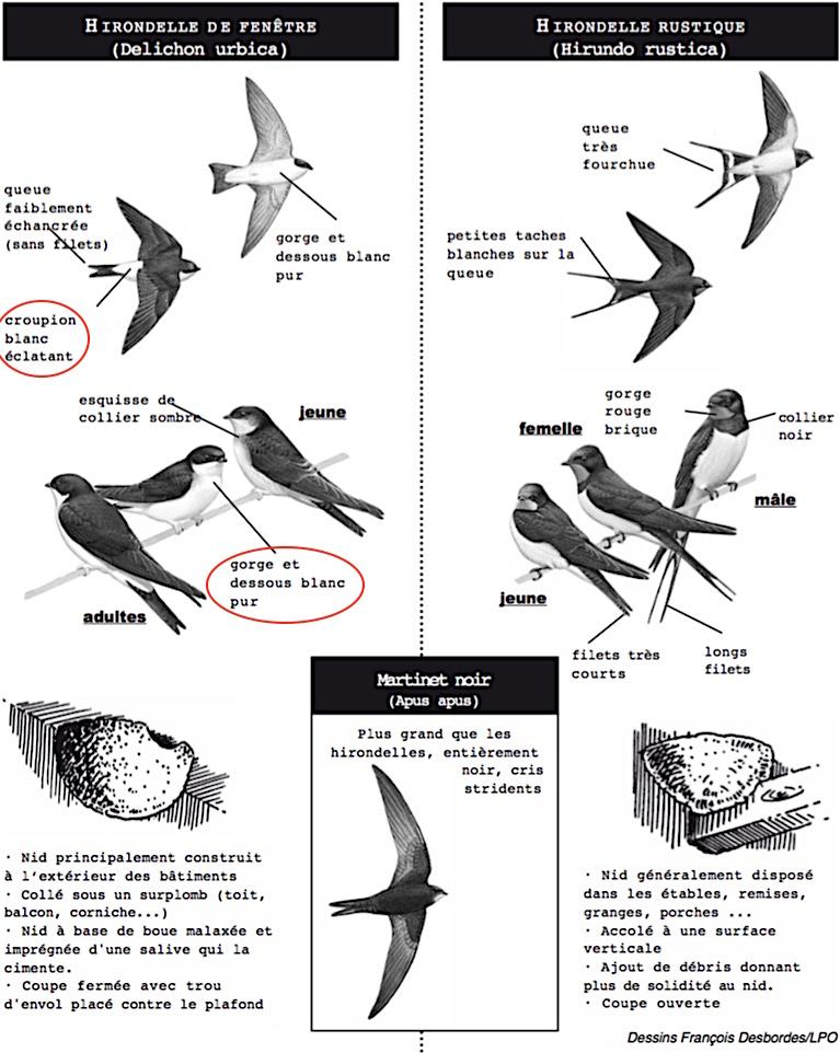 http://files.biolovision.net/www.faune-champagne-ardenne.org/userfiles/OiseauDeLAnnee/DistinctionHFHR.jpg