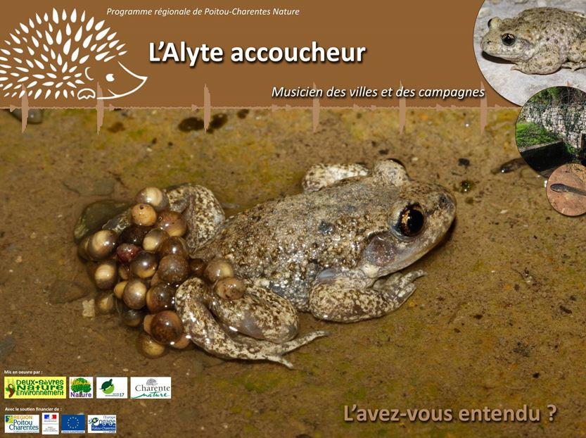 http://files.biolovision.net/www.faune-charente-maritime.org/userfiles/AlyteCapture.JPG