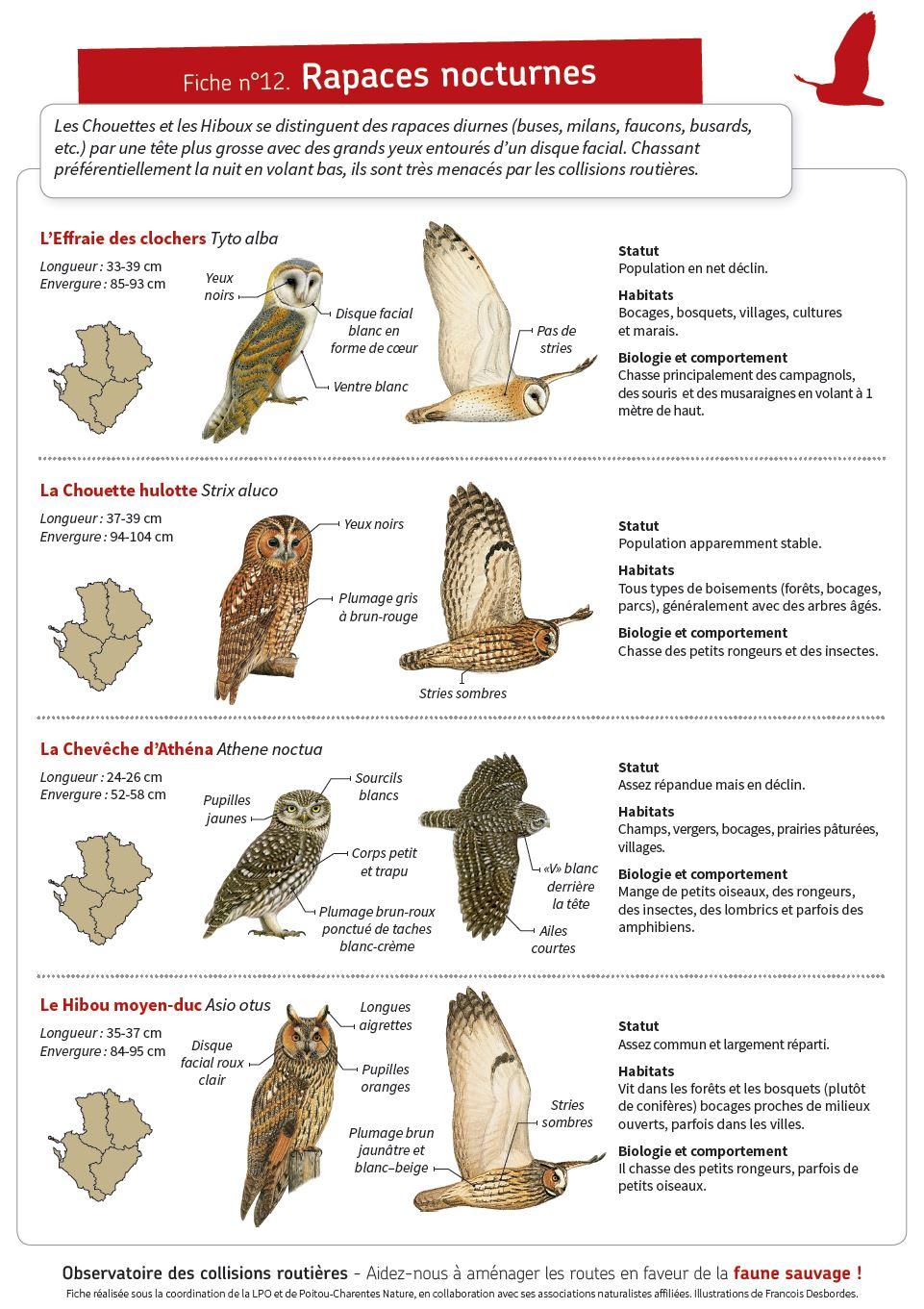 http://files.biolovision.net/www.faune-charente-maritime.org/userfiles/Capturechouette.JPG