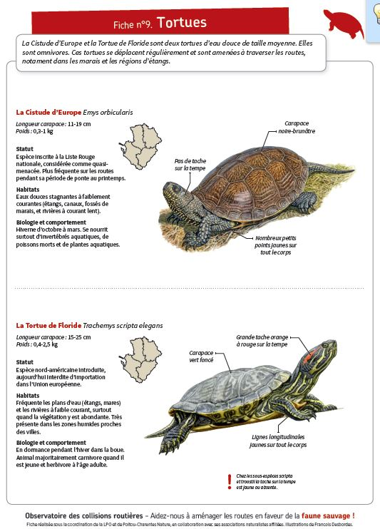 http://files.biolovision.net/www.faune-charente-maritime.org/userfiles/Fauneetroute/Capturetortue.JPG