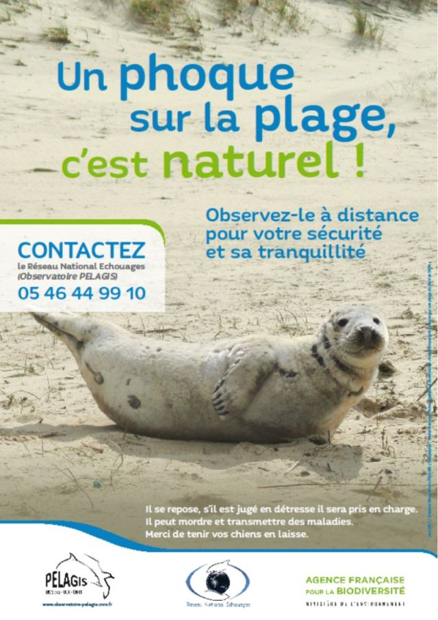 http://files.biolovision.net/www.faune-charente-maritime.org/userfiles/Mammiferes/phoquegris.jpg