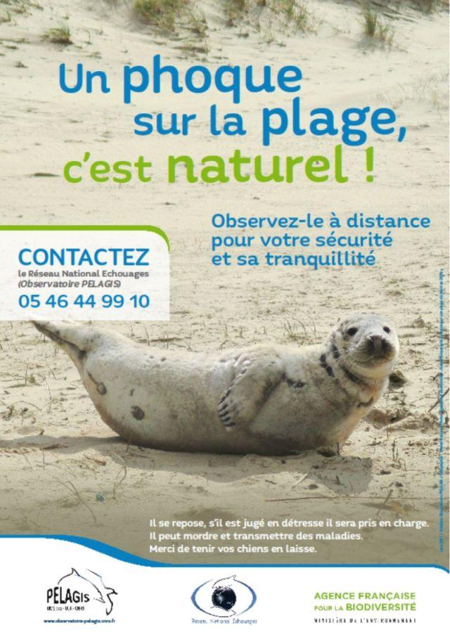 http://files.biolovision.net/www.faune-charente-maritime.org/userfiles/Mammiferes/phoquegris.jpg
