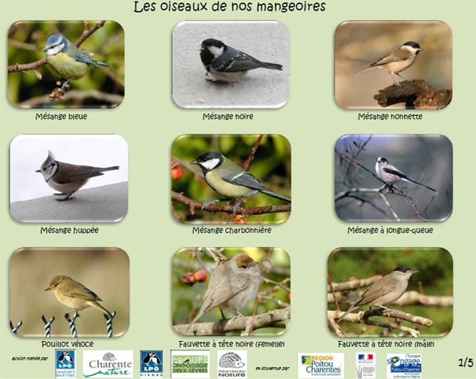 http://files.biolovision.net/www.faune-charente-maritime.org/userfiles/Oiso/Oiseauxdesjardins.jpg