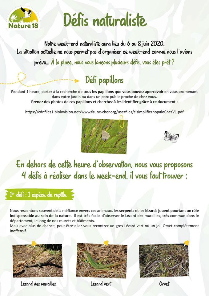 http://files.biolovision.net/www.faune-cher.org/userfiles/dfi1.jpg