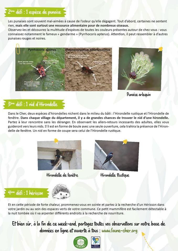 http://files.biolovision.net/www.faune-cher.org/userfiles/dfi2.jpg