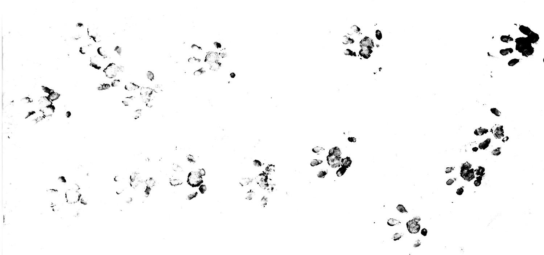 http://files.biolovision.net/www.faune-france.org/userfiles/FauneFrance/FFnews/Empreinteshrissonlite.jpg