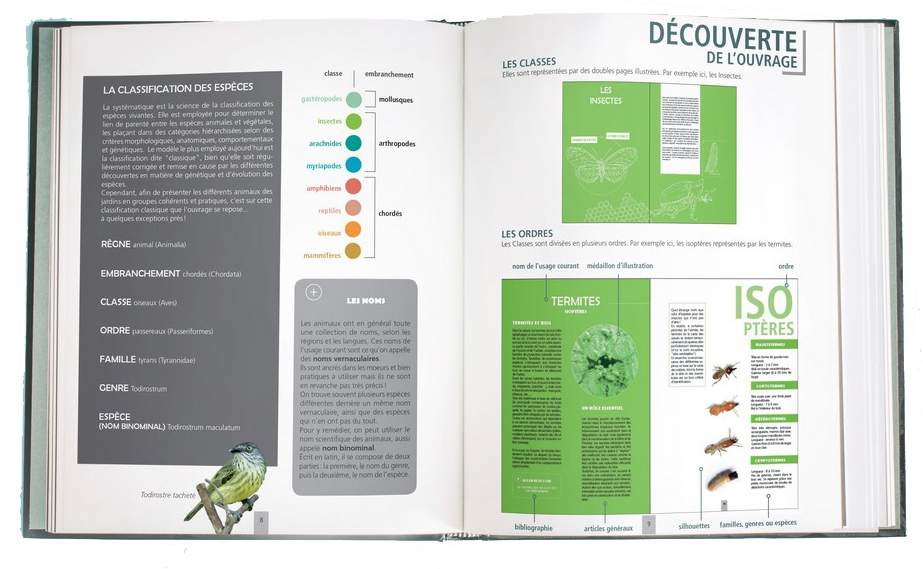 http://files.biolovision.net/www.faune-guyane.fr/userfiles/Documentsdivers/livrePetitesbtesdesjardinsextrait2ONF.jpg