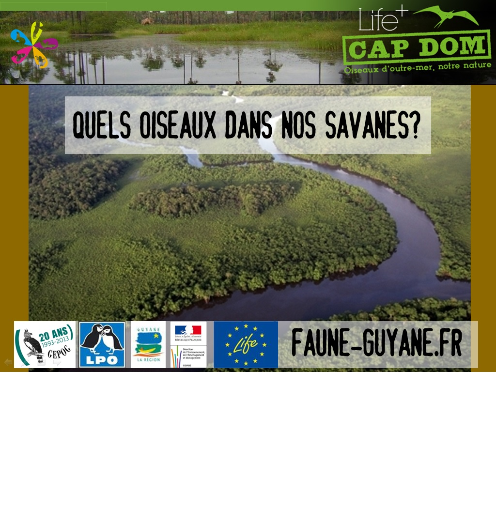 http://files.biolovision.net/www.faune-guyane.fr/userfiles/Documentsdivers/news/soireeGEPOGsavanes28.07.13.pdf