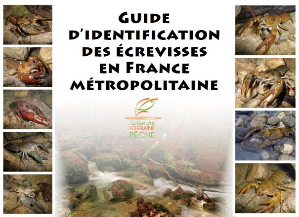 http://files.biolovision.net/www.faune-limousin.eu/userfiles/Crustaces/miniatureguidecrevissesLorrainelight.png