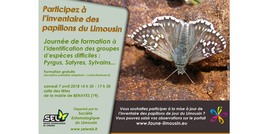 http://files.biolovision.net/www.faune-limousin.eu/userfiles/Papillon/10.jpg
