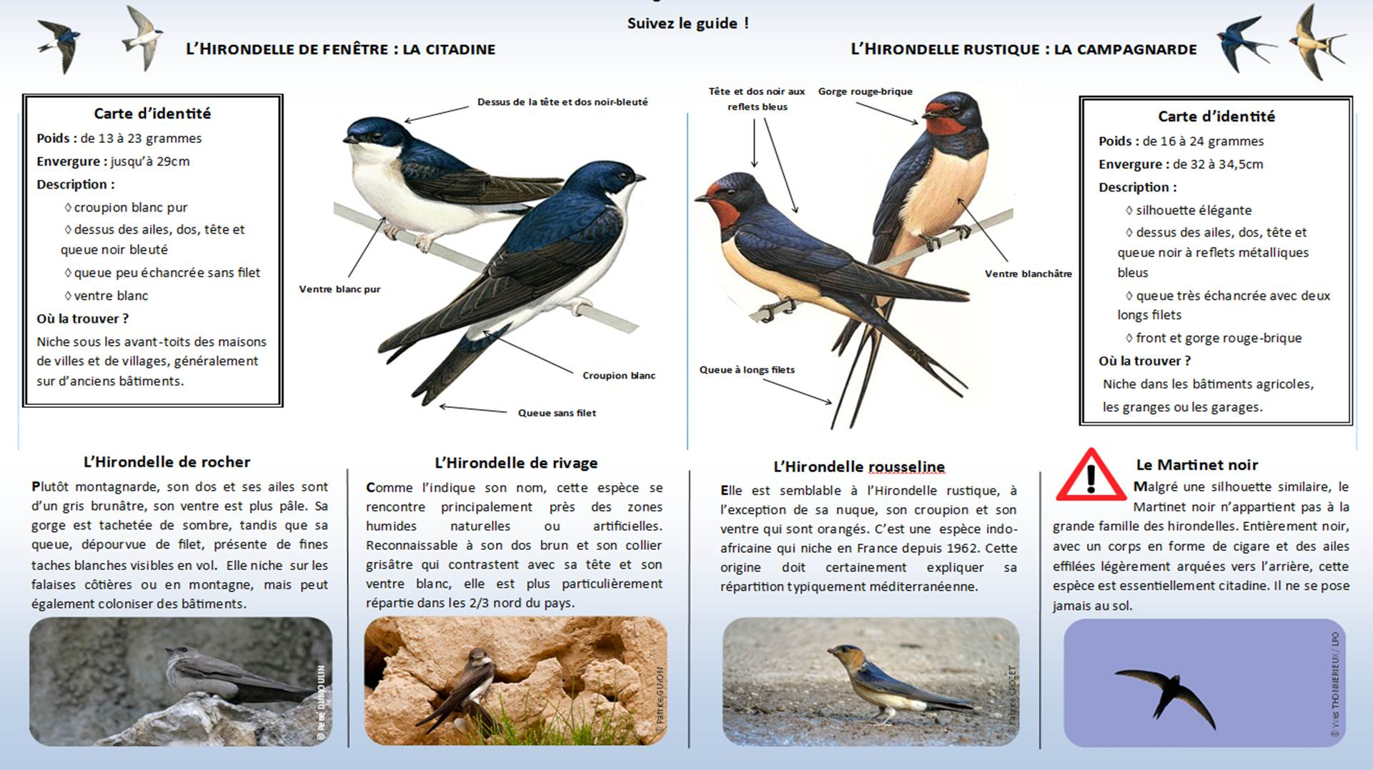 http://files.biolovision.net/www.faune-lorraine.org/userfiles/Enqutehirondelle/Identifier-les-hironelles-du-bti.jpg