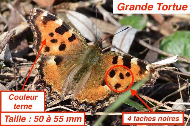 http://files.biolovision.net/www.faune-lorraine.org/userfiles/GrandeTortueFMH.jpg