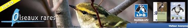 http://files.biolovision.net/www.faune-lorraine.org/userfiles/PORTAILSNATIONAUX/Oiseauxrares.jpeg