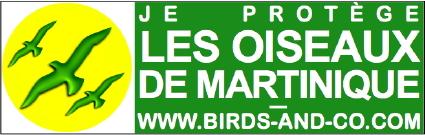http://files.biolovision.net/www.faune-martinique.org/userfiles/Sticker425.jpg