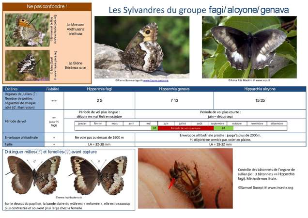 http://files.biolovision.net/www.faune-paca.org/userfiles/Critreshipparchia.f-g-a.jpg