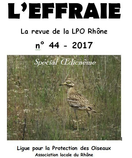 elanion blanc 2017