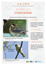 http://files.biolovision.net/www.faune-rhone.org/userfiles/OiseauxDesJardins/Fichesidentification/FICHESCOMPARATIVES01Jeunesmsanges.jpg