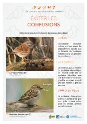 http://files.biolovision.net/www.faune-rhone.org/userfiles/OiseauxDesJardins/Fichesidentification/FICHESCOMPARATIVES02Moineauaccenteur.jpg
