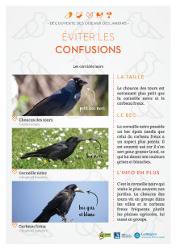 http://files.biolovision.net/www.faune-rhone.org/userfiles/OiseauxDesJardins/Fichesidentification/FICHESCOMPARATIVES03Corvids.jpg