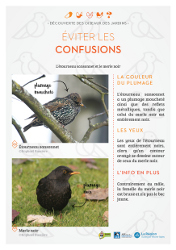 http://files.biolovision.net/www.faune-rhone.org/userfiles/OiseauxDesJardins/Fichesidentification/FICHESCOMPARATIVES04Etourneaumerle.jpg