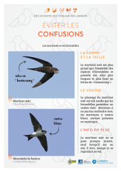 http://files.biolovision.net/www.faune-rhone.org/userfiles/OiseauxDesJardins/Fichesidentification/FICHESCOMPARATIVES05Martinethirondelle.jpg