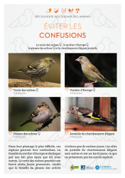 http://files.biolovision.net/www.faune-rhone.org/userfiles/OiseauxDesJardins/Fichesidentification/FICHESCOMPARATIVES06Fringilles.jpg