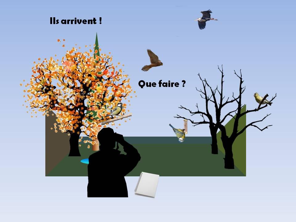 http://files.biolovision.net/www.faune-rhone.org/userfiles/OiseauxDesJardins/TutoProtocole/PresentationProtocole2.JPG