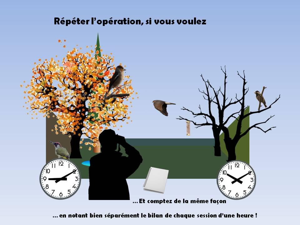 http://files.biolovision.net/www.faune-rhone.org/userfiles/OiseauxDesJardins/TutoProtocole/PresentationProtocole4.JPG