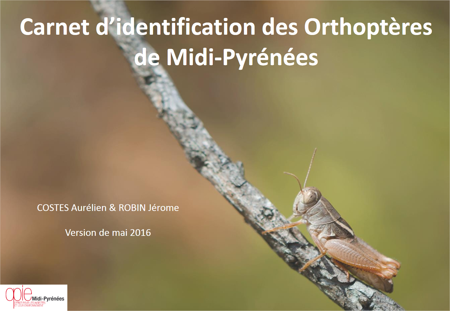 http://files.biolovision.net/www.faune-tarn-aveyron.org/userfiles/page5.jpg