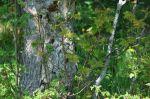 Les oiseaux de la montagne - Plateau de Solaison