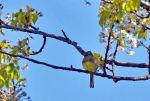 Initiation à la reconnaissance des chants d'oiseaux  (sortie n°2)