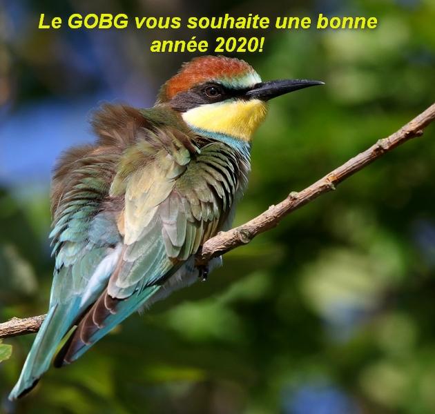 http://files.biolovision.net/www.gobg.ch/userfiles/GOBG/Gupiers2020.jpg