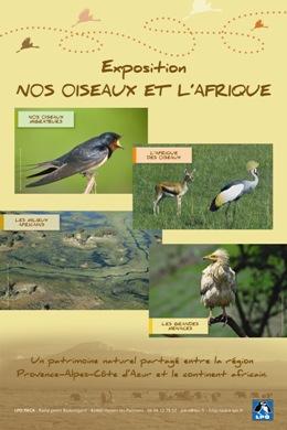 official photos 955b1 6f95f Les oiseaux, symboles de liberté et de vie sauvage, se jouent des  frontières comme des distances. Beaucoup de ceux que nous connaissons chez  nous se ...