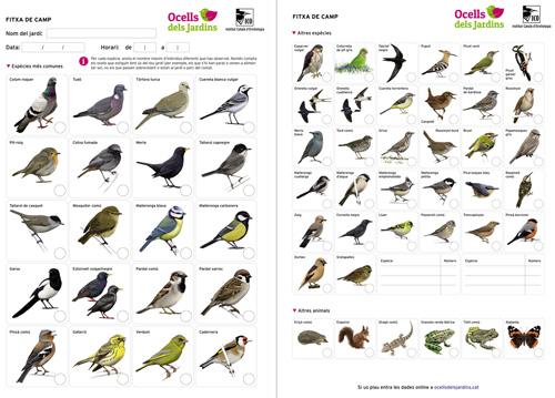 http://files.biolovision.net/www.ocellsdelsjardins.cat/userfiles/fitxa2.jpg