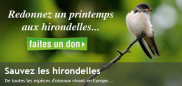 http://www.lpo.fr/faites-un-don/sauvez-les-hirondelles