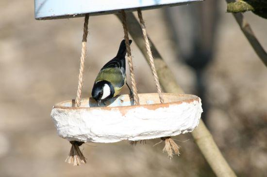 Toutes les nouvelles - Comment faire fuir les oiseaux des cerisiers ...