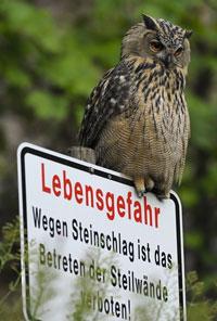 http://files.biolovision.net/www.ornitho.de/userfiles/infoblaetter/Anleitungen/UhuRKistowski.jpg